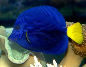 Fische im Meerwasseraquariuem